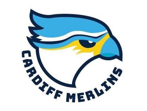 Cardiff Merlins flag